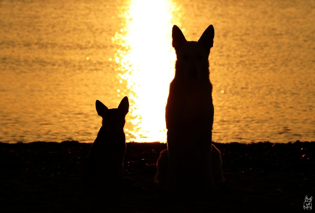 Zloty und Panya im Gegenlicht beim Sonnenaufgang über Rügen