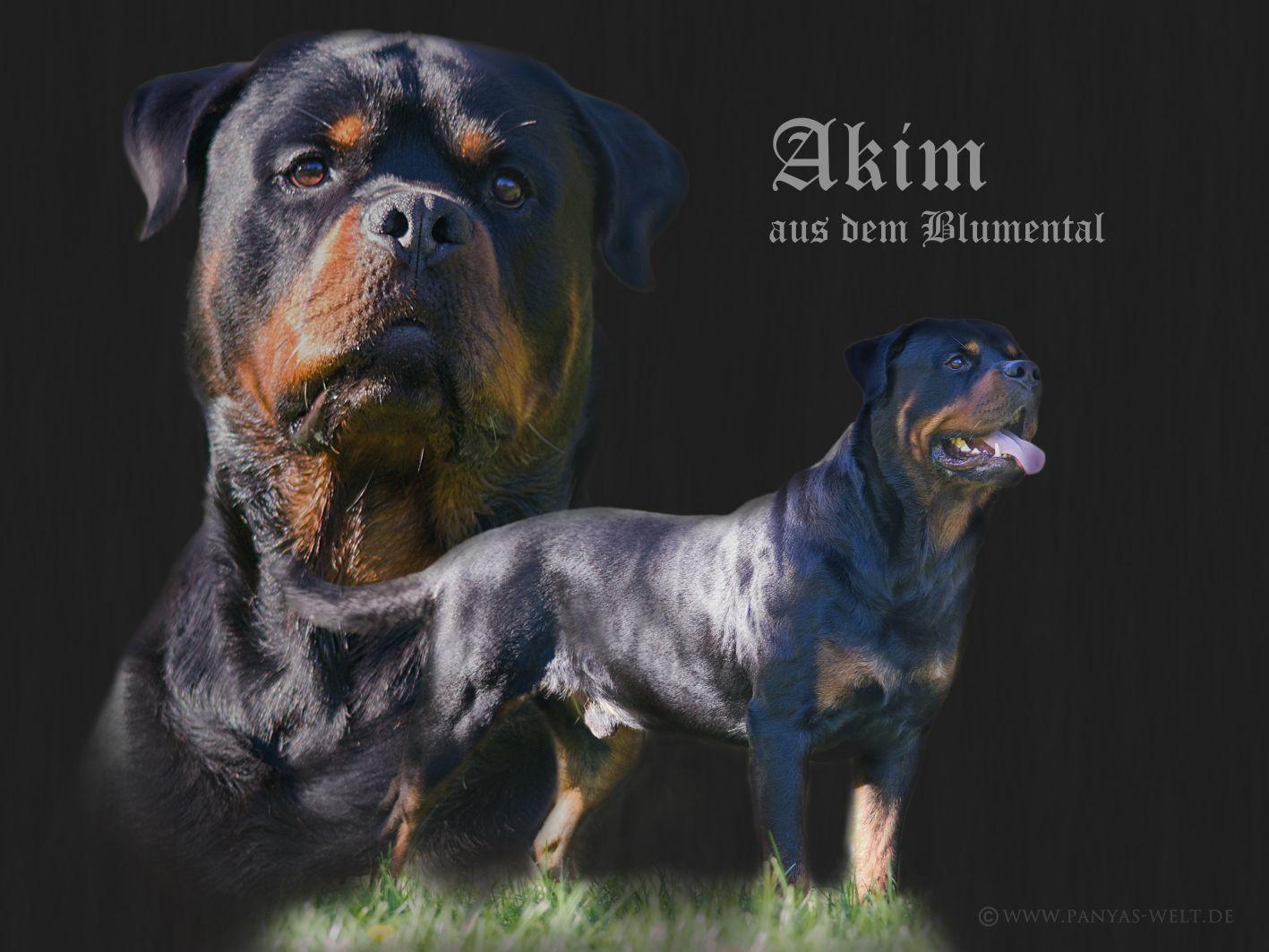 Akim Collage