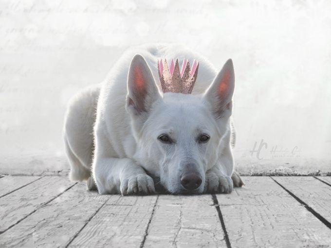 Krone auf Holzboden