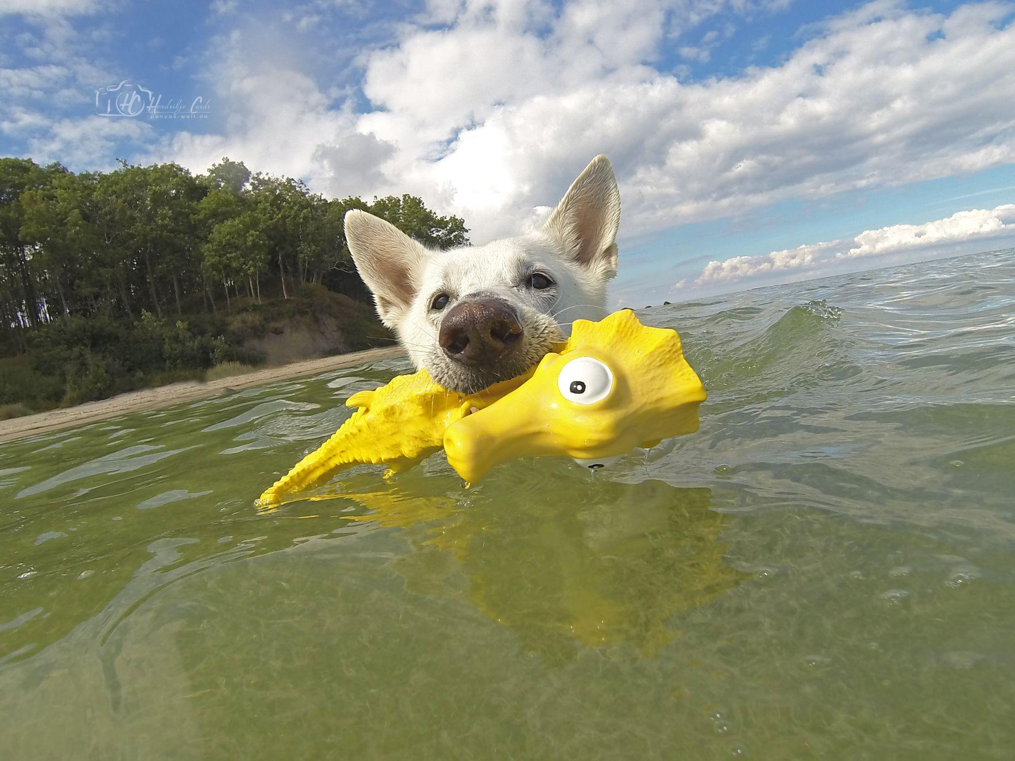 Frauchen, ich rette das Seepferdchen, keine Sorge!